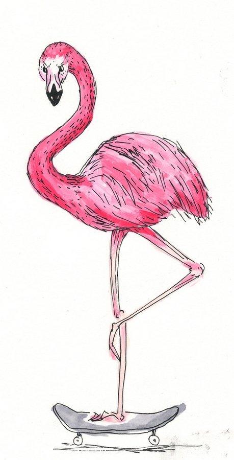flamingoskate